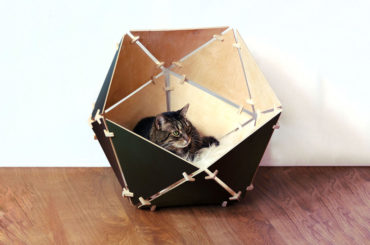 'Cat'hedral