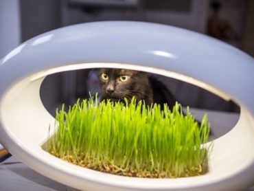 Unique Fresh Grass Lamp