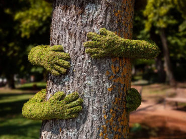 THIS PRODUCT IS THE TREE HUGGER ART OF THE CENTURY