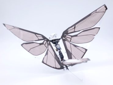 BIOMIMIC DRONE BECOMES ACTUAL BIRD