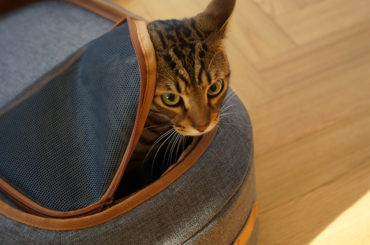 A BACKPACK, PET TRAVEL CARRIER AND BED ALL ON ONE FOR YOUR PRECIOUS ONES