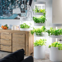 A SIMPLY AUTOMATIC HOME GARDEN SYSTEM